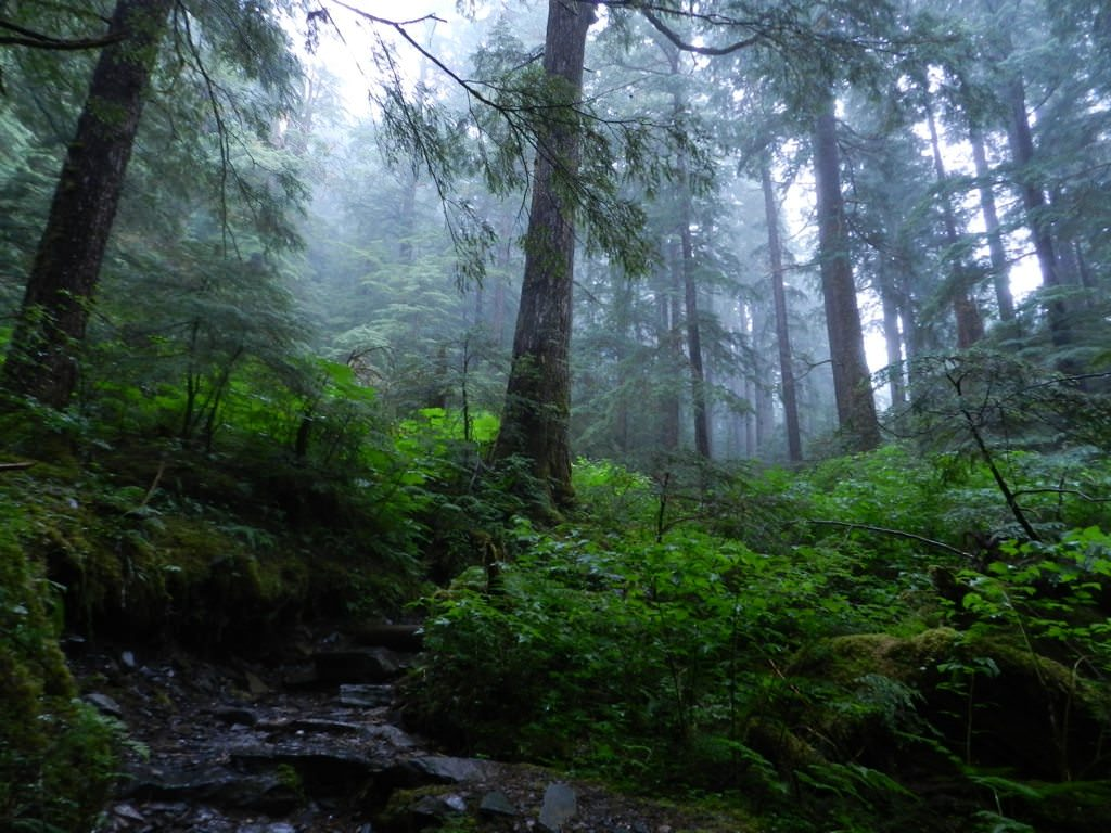 Into the Wild—Ketchikan: Day 6 Aboard Holland America's Oosterdam