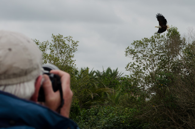 Watching one of the great Eagles take flight. Boating, again Photo © 2013 Aaron Saunders