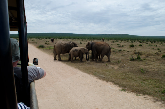 The proximity of the elephants to the 4x4 is evident in this photograph. Photo © 2013 Aaron Saunders