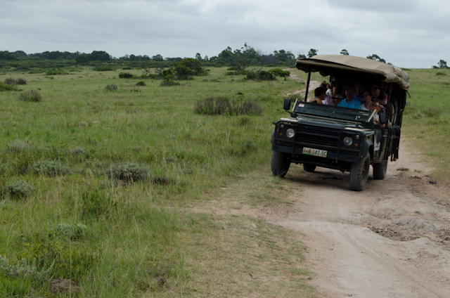 Even though the safari wasn't as naturally wild as the one in Richards Bay, it was a true off-road experience. Photo © 2013 Aaron Saunders
