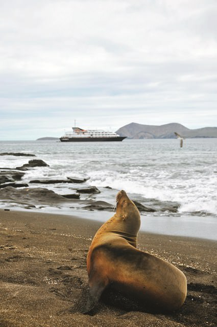 Join us in the Galapagos in Novembe for a very special Live Voyage Report! Photo courtesy of Silversea Cruises