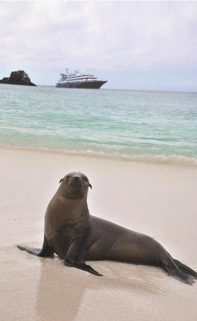 Sea Lion with Silver Galapagos in background. Courtesy Silversea Cruises