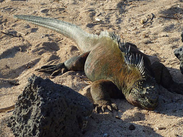 The ecosystem of the Galapagos is one of the most unique in the world. Photo courtesy of Wikipedia / Creative Commons