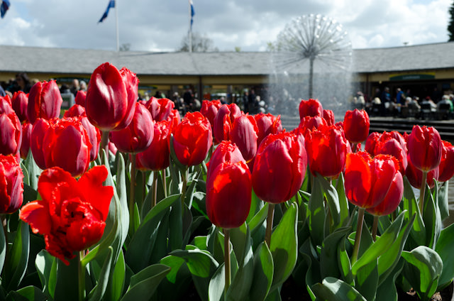 This afternoon, Tauck guests indulged in one of the Netherland's most beautiful exports - tulips - with a visit to the Keukenhof Gardens. Photo © 2014 Aaron Saunders