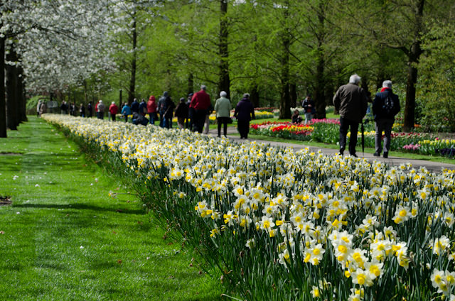 At Keukenhof, guests were invited to simply stroll and explore at their own pace; a wonderful treat! Photo © 2014 Aaron Saunders