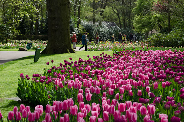 At every turn, Keukenhof offers up another picturesque sight. Photo © 2014 Aaron Saunders