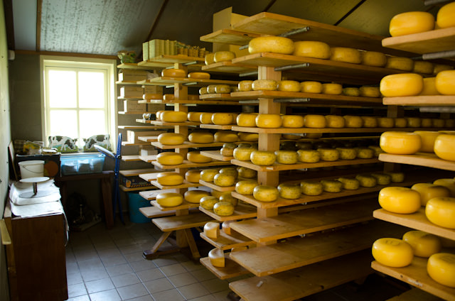 These wheels of cheese have to be turned over - by hand - every day for up to three weeks before they are ready to sell. Photo © 2014 Aaron Saunders