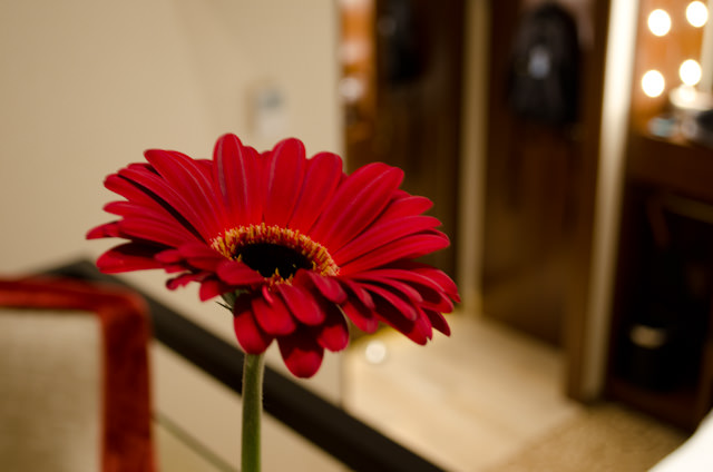 An added touch this evening: fresh flowers in every stateroom, purchased ashore for guests in Hoorn. Photo © 2014 Aaron Saunders