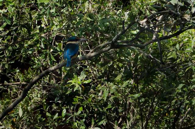 Doing a bit of bird-watching in one of the dense mangroves. Photo © 2014 Aaron Saunders