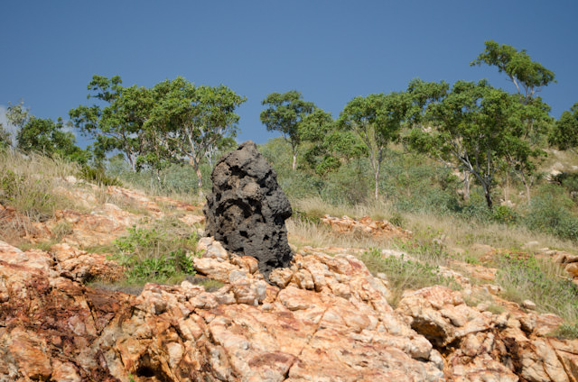 The gigantic black blob? It's a termite colony. Photo © 2014 Aaron Saunders