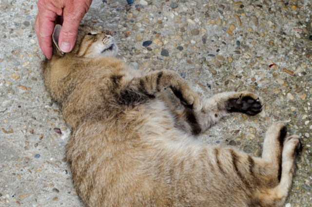 The family cat also enjoyed plenty of attention! Photo © 2014 Aaron Saunders