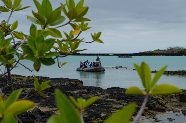 Today, our Silversea Galapagos Expedition came ashore on the southern island of Floreana. Photo © 2014 Aaron Saunders