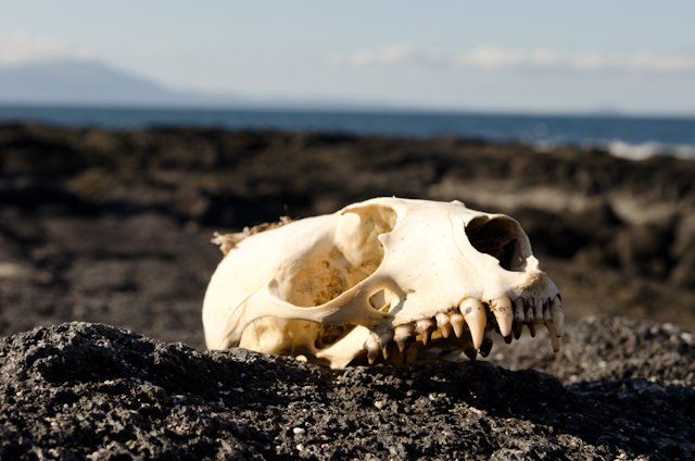 Not everything in the Galapagos is all wonder and enchantment, though. Photo © 2014 Aaron Saunders