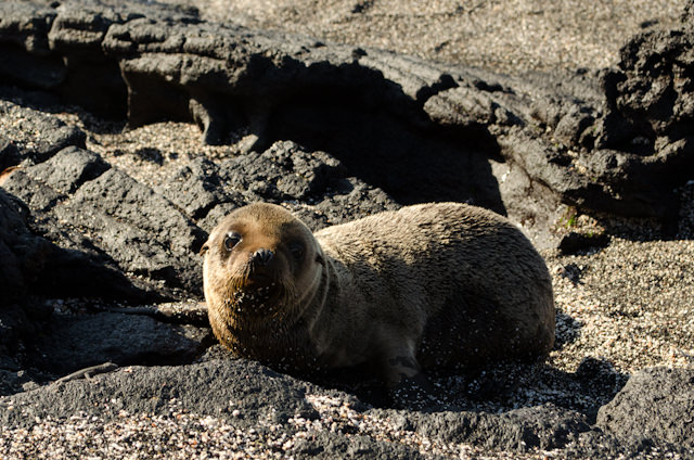There's also some amazingly-cute critters out and about. The sheer number of animals just resting on the beach, waiting for you, is surreal. Photo © 2014 Aaron Saunders