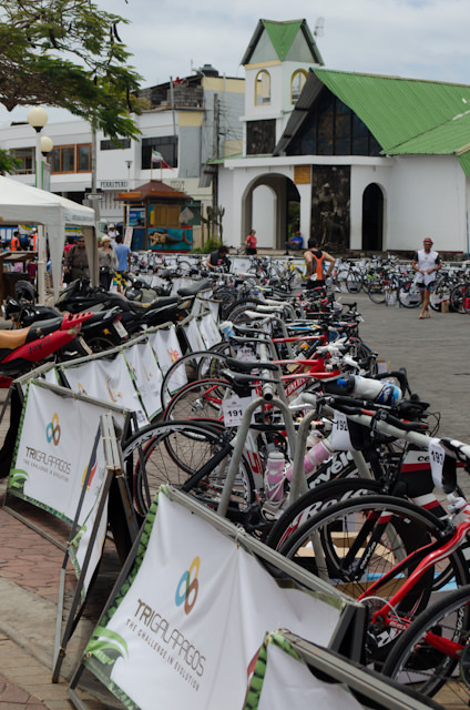 In Puerto Ayora, a triathlon caused some logistical challenges...Photo © 2014 Aaron Saunders