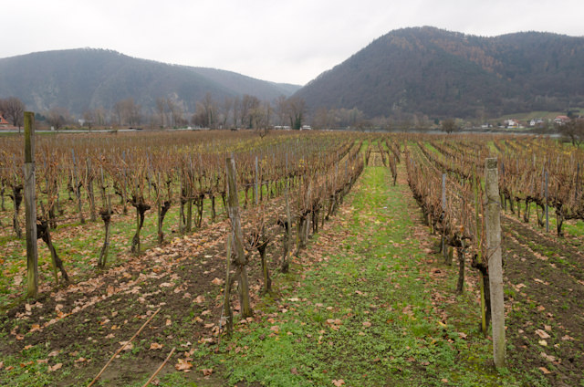 Proof you're in a wine-producing region: vineyards galore. Photo © 2014 Aaron Saunders