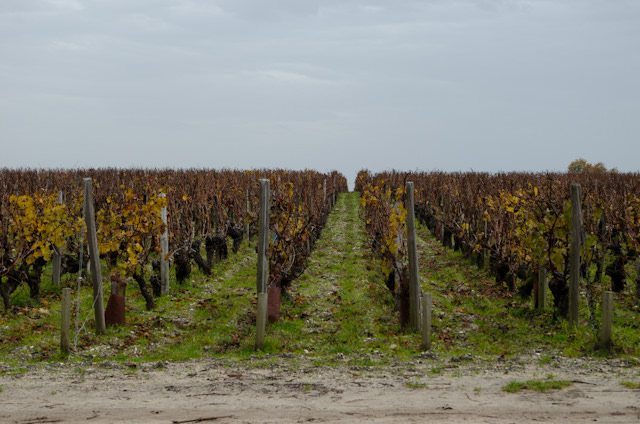 In this part of France, vineyards stretch as far as the eye can see. Photo © 2014 Aaron Saunders