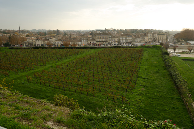 Even the Citadel has a vineyard. C'est bon! Photo © 2014 Aaron Saunders