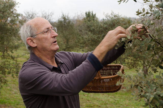 Checking the trees above the truffles; these truffles mainly come from oak and hazelnut trees. Photo © 2014 Aaron Saunders