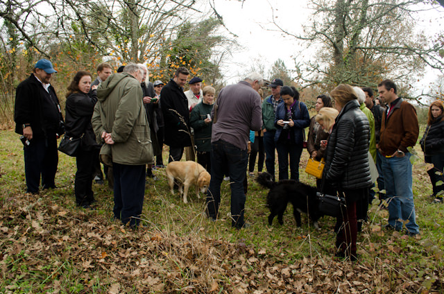 Once Farrah had sniffed out the truffle, guests from the Viking Forseti crowded around in anticipation of what the find would be like. Photo © 2014 Aaron Saunders