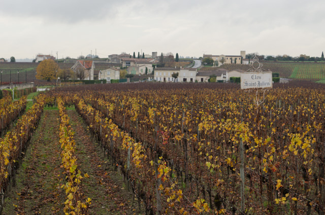 A beautiful sight: vineyards as far as the eye can see. Photo © 2014 Aaron Saunders