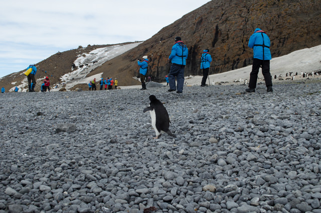 Penguins and Explorers. Photo © 2015 Aaron Saunders