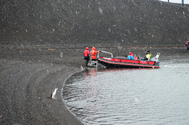 Snow begins to fall heavily as we return to our Polarcirkel boats and the waiting FRAM. Photo © 2015 Aaron Saunders