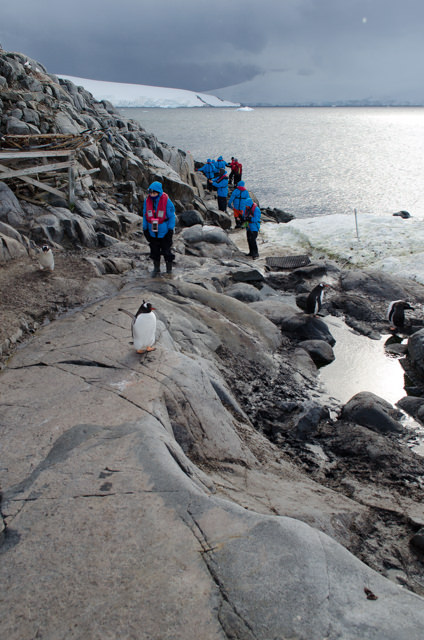 ...and head ashore at Port Lockroy. Notice the penguin blocking the path! Photo © 2015 Aaron Saunders