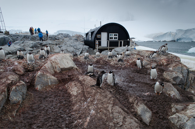 ...and the penguins. Photo © 2015 Aaron Saunders
