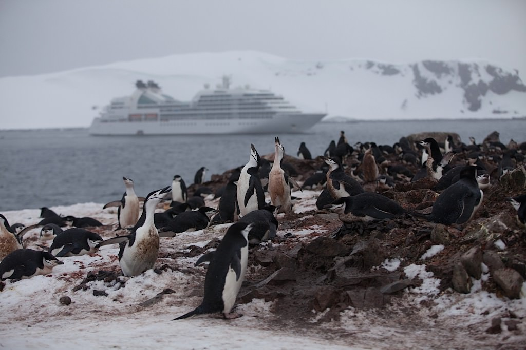 Seabourn Quest, Penguins