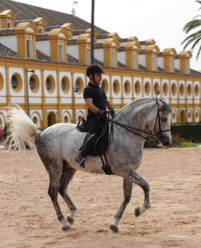 A horseman at the Royal Andalusian School of Equestrian Art, in Jerez de la Frontera, on one of the tours available from Star Flyer. © 2015 Lew Toulmin