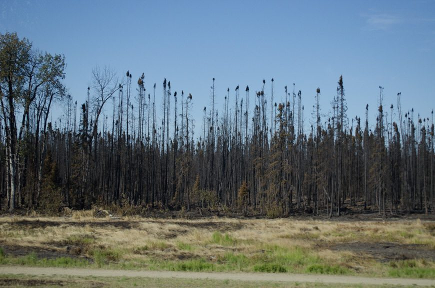 Recent forest fire activity near the town of Willow, Alaska, has left trees blackened on both sides of the highway. Photo © 2015 Aaron Saunders