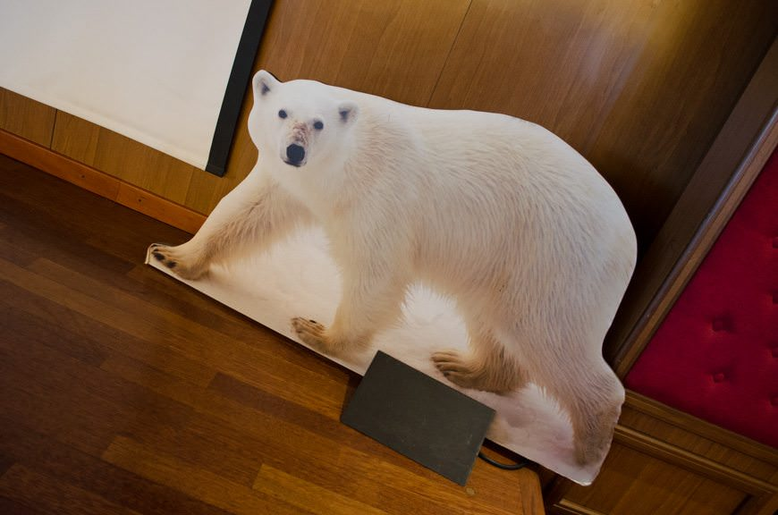 Where are the Polar Bears? They're not saying. Photo © 2015 Aaron Saunders