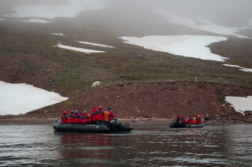 Alternating places with other zodiacs to ensure that all guests had a good view, we tracked this polar bear for nearly an hour. All told, we were out in the elements for nearly three hours. Photo © 2015 Aaron Saunders