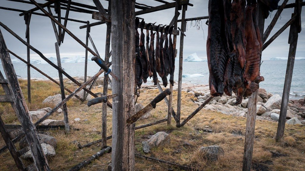 Drying seals. ©2015 Ralph Grizzle