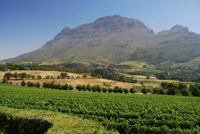 In the magnificent Wine Country outside of the town of Franschhoek