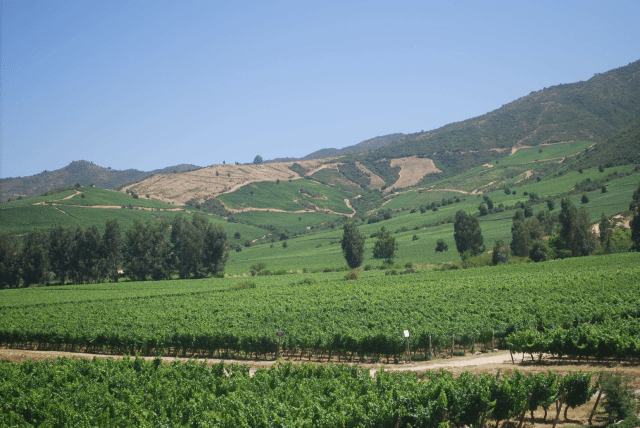 The wine country in the Colchaga Valley south of Santiago
