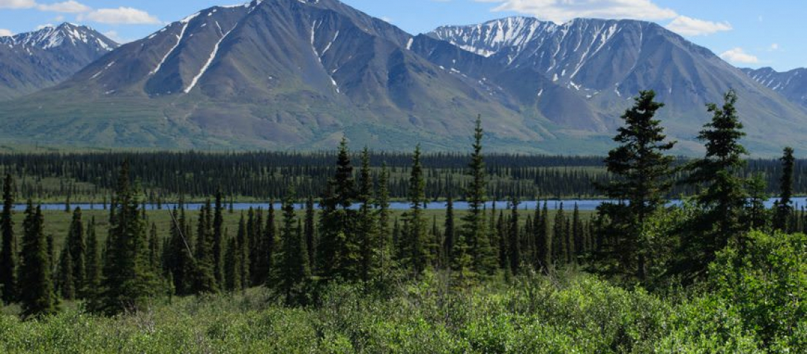 Alaska Cruise Tours offer up the chance to see parts of the state inaccessible by water, like sprawling Denali National Park. Photo © 2015 Aaron Saunders